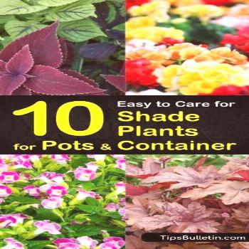 Container Plants For Shade Porches Vegetable gardening Vegetable gardening     container plants for