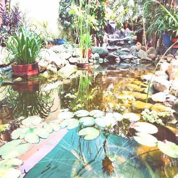 plant flower table tree outdoor water and natureYou can find Ponds and more on our ant flower table